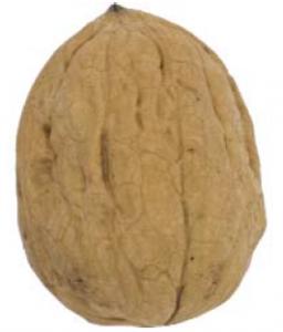 nuca-chandler
